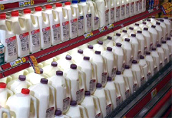 dairy case line-up